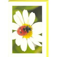 Přání do obálky - Colors of nature
