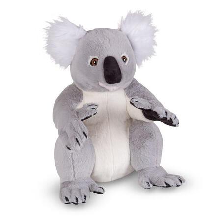 Koala jako živá - 1
